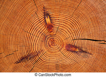 Log structure - Structure of very big pine log