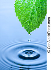 Green leaf water drops