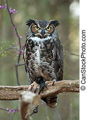 Sitting Owl - Great horned owl Bubo virginianus sitting on a...