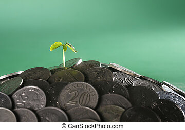 money plant - small plant growing from the heap of coin
