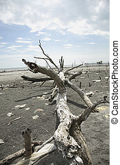 dead tree - stock image about the polluted beach