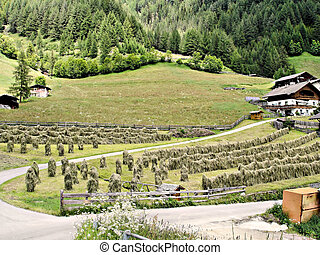 Hay harvest in South Tyrol - Hay harvest in the Tauferer...