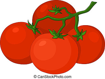 Tomatoes - Cluster red fresh tomatoes on a green branch,...