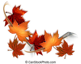 maple leaves - Autumn maple leaves isolated on white...
