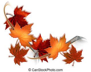 Érable, feuilles