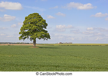 farmland with tree - an english landscape with a lone tree...