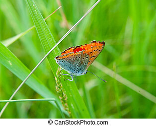 butterfly on green grass - The beautiful butterfly on green...