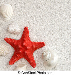 White seashells and red seastar on white sand