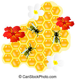 Bees on honeycomb and flowerses - Insect of the bee on...