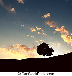 lonely tree on the horizon - landscape with a lonely tree...