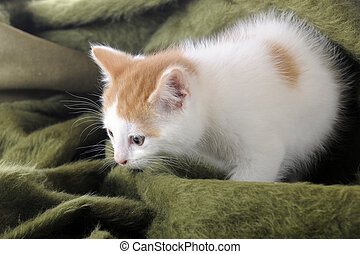 Playing in Blankets - An adorable tan and white kitten...