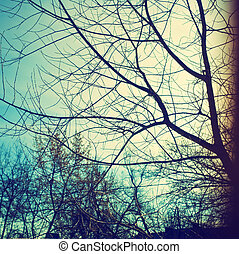 Branches and sky - Naked branches of a tree against the dark...