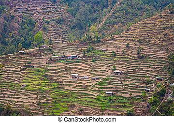 Terraced rice fields in Helambu, Nepal