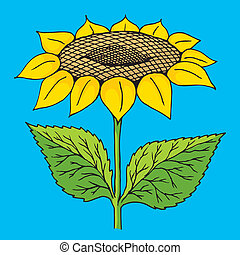 Sunflower sketch - Colorful sunflower sketch on blue...