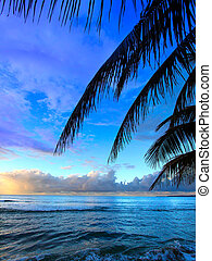 Puerto Rico Sunset - Beautiful sunset framed by palm fronds...
