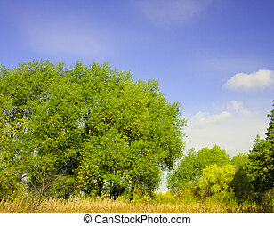 Summer landscape: the bright foliage of the trees, grass and...