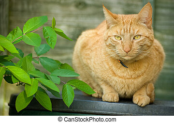 red tabby cat - beautiful red tabby cat sitting in the shade...
