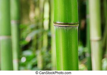 bambù,  44