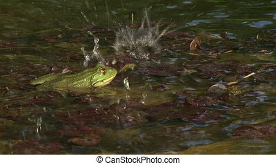 Frog rests