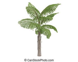 Giant Mountain Fishtail Palm or Caryota gigas - Giant...
