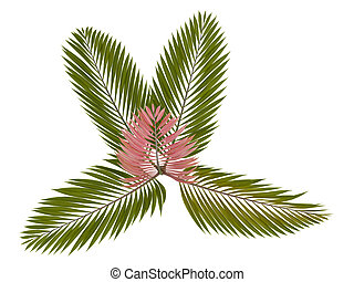 Red leaf Palm or Chambeyronia macrocarpa - Red leaf Palm or...