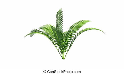 Growing fern with alpha channel