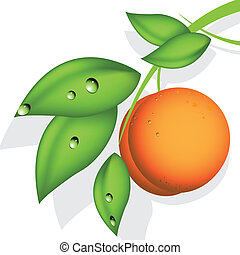 orange peach - illustration, orange peach on green branch on...