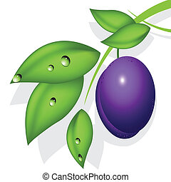 plum - illustration, plum on green branch on white...