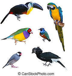 Big Bird Collection - Collection of tropical big birds...
