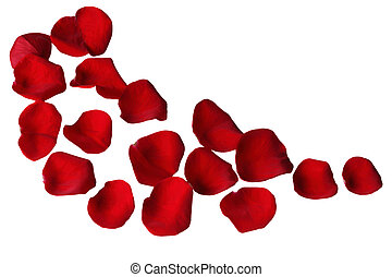 Rose Petals - Red rose petals on a curve