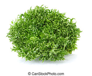 Curly - Escarole endive frisee lettuce isolated on white...