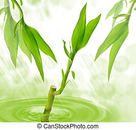 Bamboo in water
