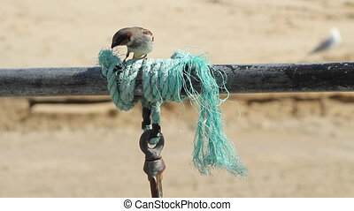 Bird get string for its nest - A bird trying to get string...