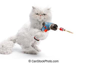 White cat with screwdriver on white background