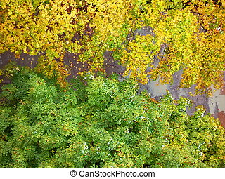 The colours of the autumnn - The bright colours of the...