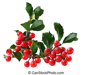 Holly Berry and Leaves isolated on white background
