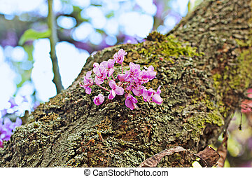 Cherry tree - Pink cherry tree with flowers growing on trunk