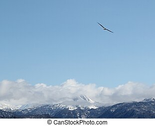 Soaring bald eagle - A lone bald eagle soaring over the...