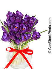 Crocus - Purple crocus flower in the vase isolated on white