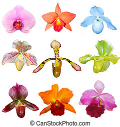 Set of Orchids - Set of fresh orchids isolated on white...