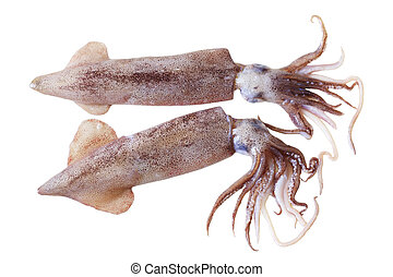 Squids - Two fresh squids isolated on white background