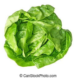 Boston Lettuce - Single fresh boston lettuce isolated on...