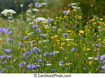 Colorful wildflowers - Colorful wildflower on the field in...