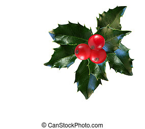 Holly Leaf and Berries - Holly leaves and berries isolated...