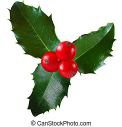 Holly - Twig of holly with berry and leaf isolated on white