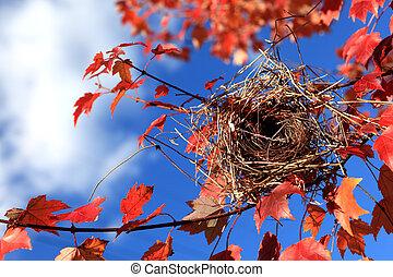 Bird nest - Empty bird nest on maple branch  in the atumn