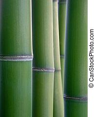bamboo reeds - close up of green bamboo reeds