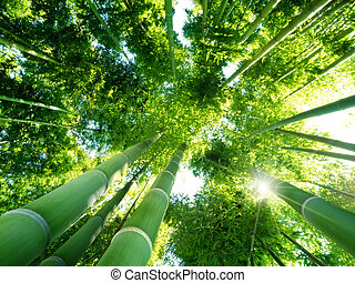 bamboo forest - low angle view of green reeds in a bamboo...