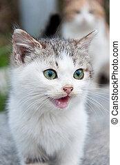 Little kitten in the yard - Meowing little kitten with green...