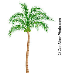 Coconut Tree - Raster illustration of a coconut tree...